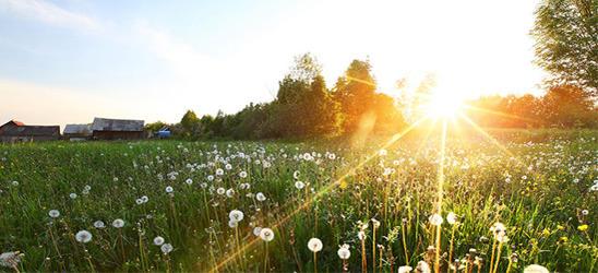 Leto sunce vitaminD artikalpunaslika